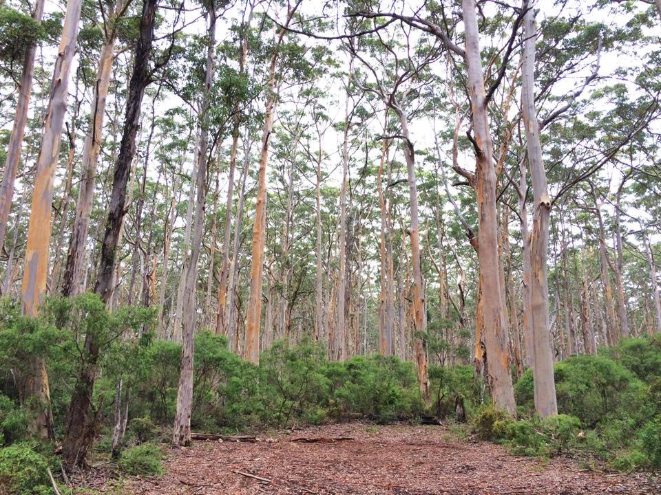 a natural chapel in the middle of the forest in Margaret River